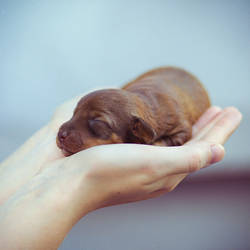 Small Life.. by Khomenko