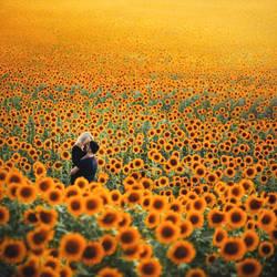 Fields of Gold.. by Khomenko