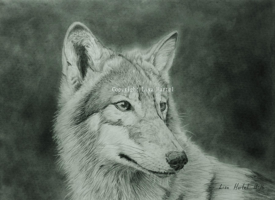 Wolf portrait by BeckyKidus