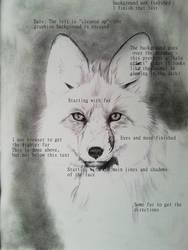 Frontal fox portrait WIP by BeckyKidus