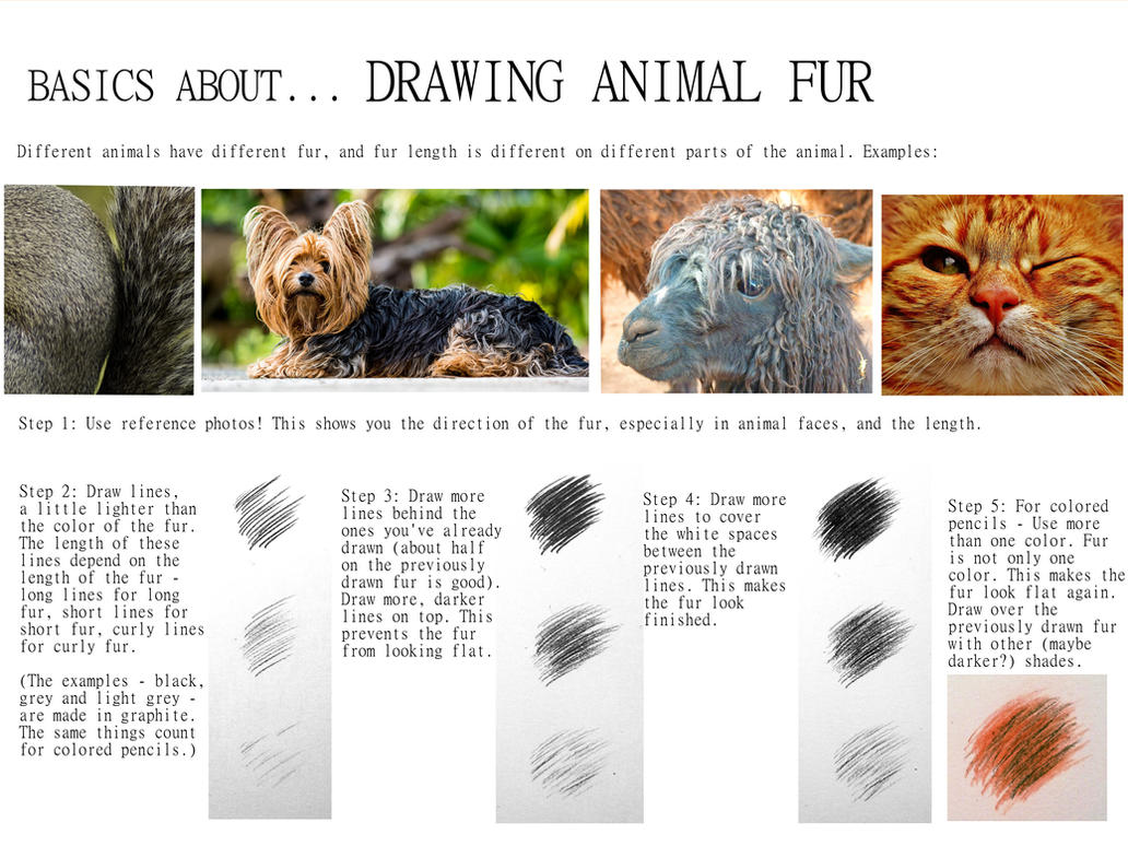 how to draw animal fur basics about animal fur by beckykidus on