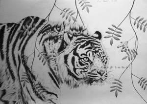 Tiger in graphite