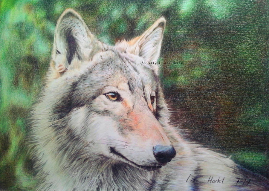 Wolf portrait IV - Dreaming of a better future