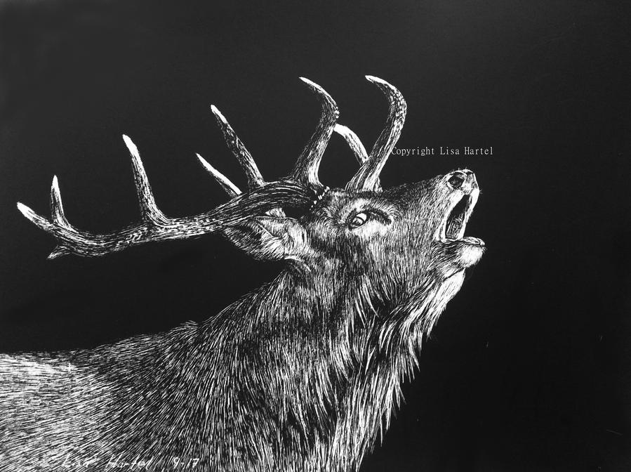 Red deer - Noisy night by BeckyKidus