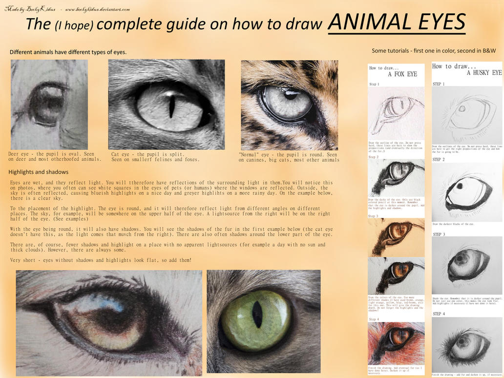 how to draw animal eyes