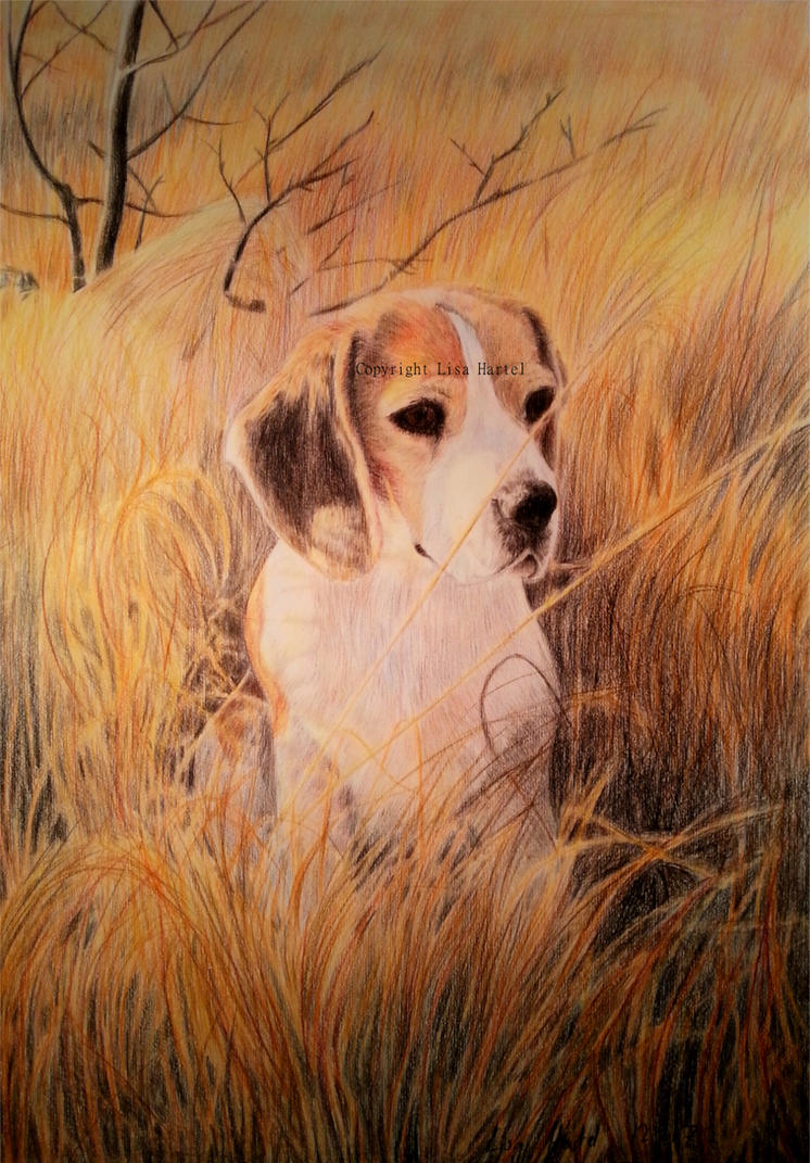 Leah the Beagle II by BeckyKidus