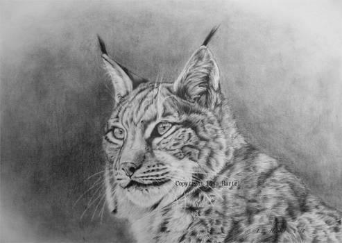 Lynx portrait II