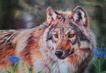 Wolf portrait VIII - Summer Wolf by BeckyKidus