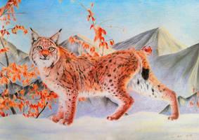 Late autumn lynx by BeckyKidus
