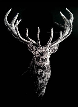 Red deer stag - Into the Light