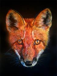 Little Fox by BeckyKidus