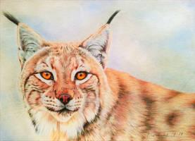 Lynx Portait III by BeckyKidus