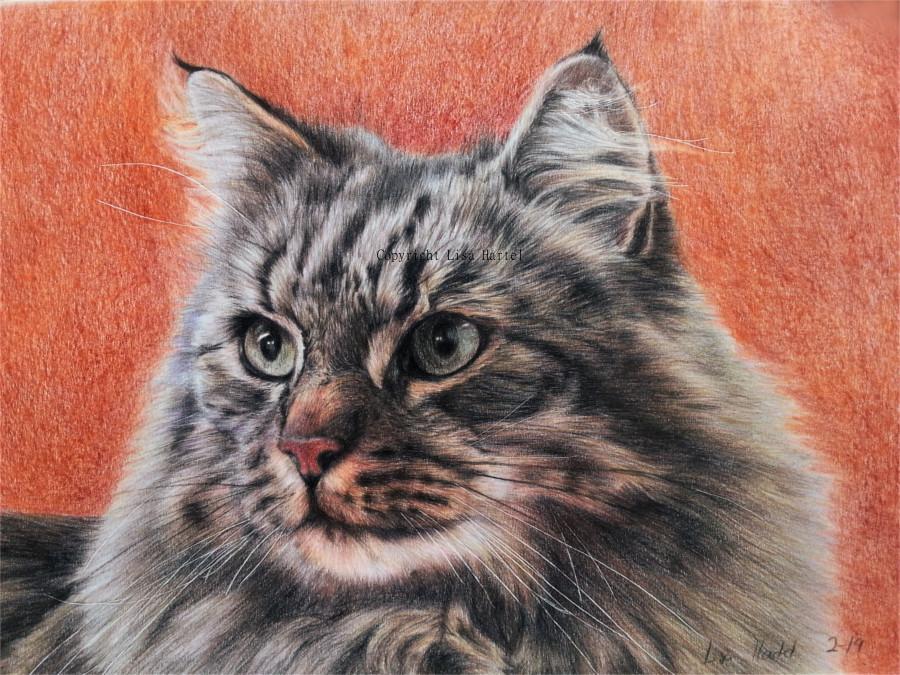 Norwegian Forest Cat by BeckyKidus