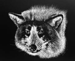 Arctic Marble Fox by BeckyKidus