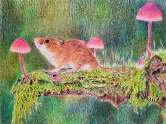 Harvest Mouse by BeckyKidus