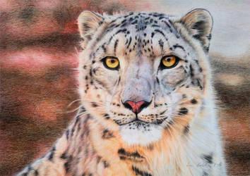 Snow Leopard V by BeckyKidus