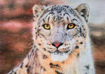 Snow Leopard V