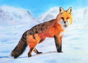 White Landscape - Red Fox II by BeckyKidus
