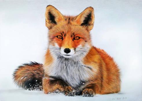 Fox - Red Alert