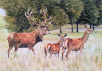Red Deer - Welcome to the Family by BeckyKidus