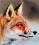 White landscape - Red fox III DETAIL