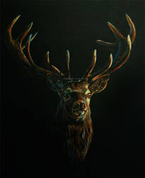 Red Deer Stag - Into the Light II