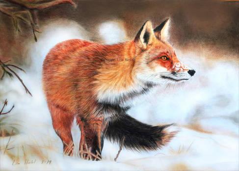 White Landscape - Red Fox III