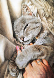 Cat: The hand hugger