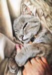 Cat: The hand hugger