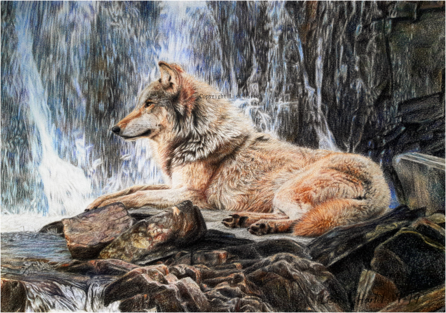 Wolf Waterfall by BeckyKidus