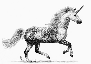 Dapple Grey Unicorn by BeckyKidus