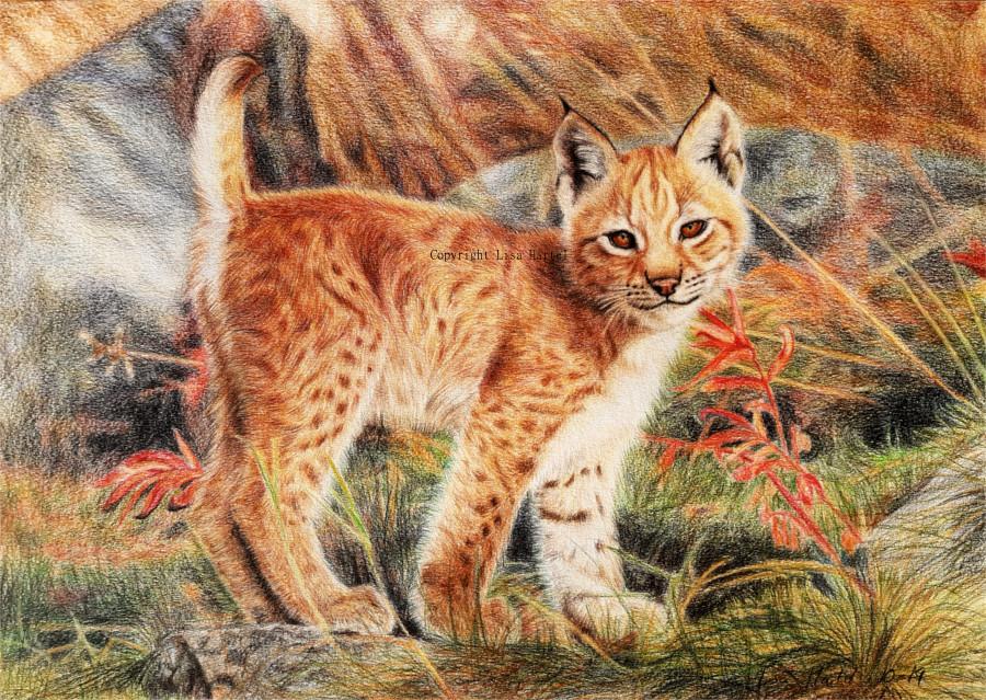 Lynx Cub - Little Miss Sunshine by BeckyKidus