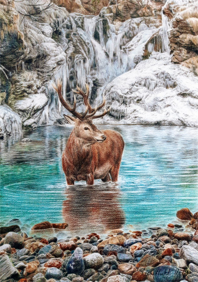 Red Deer - Cold Water (aka. The Freezing Stag) by BeckyKidus