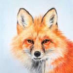 Tiny red fox by BeckyKidus