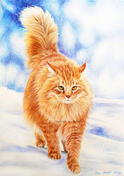 Norwegian Forest Cat - Fire and Ice