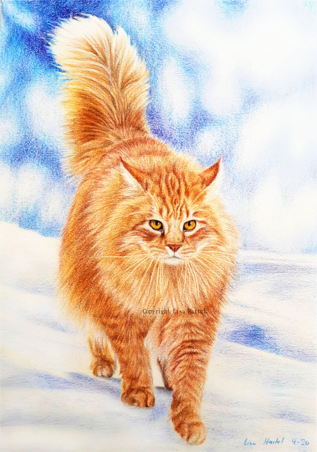 Maine Coon Cat - Fire and Ice by BeckyKidus