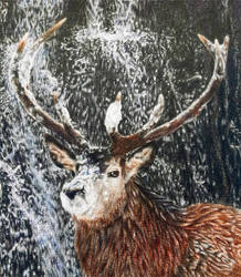 Stag Waterfall DETAIL