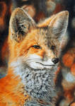 The Bright Side of the Red Fox