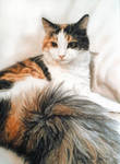 Calico cat: Lucy