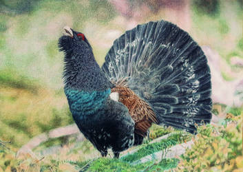 Capercaillie by BeckyKidus