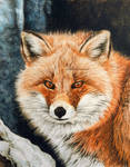 Red Fox - Fire and Frost DETAIL by BeckyKidus