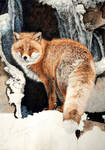 Red Fox - Fire and Frost WIP 2