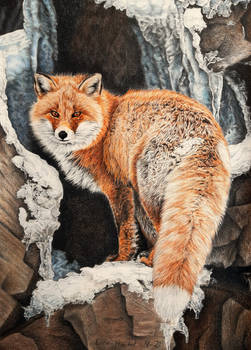 Red fox - Fire and Frost