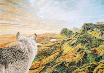 Grey Wolf - New Territory