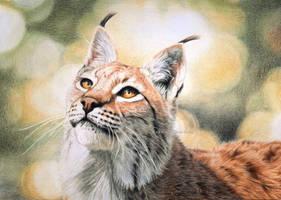 Lynx portrait IV - The Fluffy-eared Noble