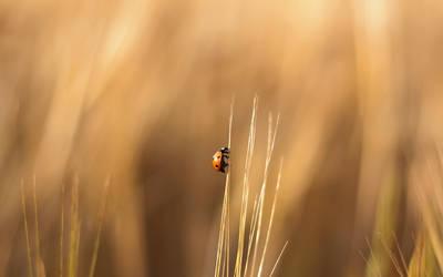 Ladybug by jsz