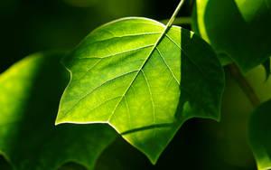 ...green... by jsz