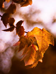 ...almost like autumn... by jsz