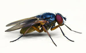 Fly, lateral view by jsz