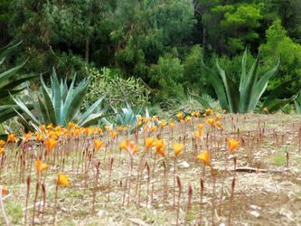 Ballet in orange in The Garden of agave by FiorellaDePietro